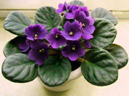 10 گیاه گلدار که زیبایی را به خانه شما می افزایند