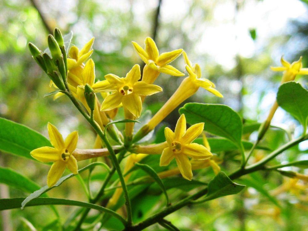 پرورش گل و گیاه زینتی